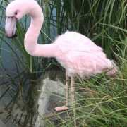 Flamingo knuffeldier 80 groot