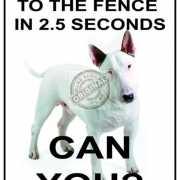 Wandplaatje beveiliging snel hondje