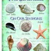 Metalen plaat met zee schelpen