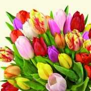 Nederlandse tulpen servetten 20 stuks
