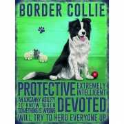 Metalen plaat Bordercollie