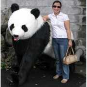Mega pluche pandabeer 192 cm