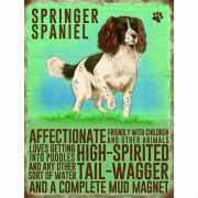 Wand decoratie Springer Spaniel