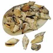 Decoratieve schelpjes in schelp
