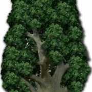 Groot decoratie bord eiken boom