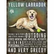 Metalen muurplaat Golden Retriever Labrador 30 x 40 cm